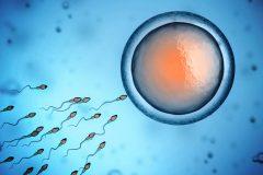 ¿Cuánto tarda el espermatozoide en fecundar el óvulo?