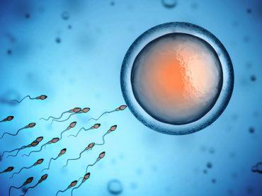 cuanto tarda el espermatozoide en fecundar el ovulo